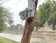 ملتان: ایک شخص گھر کا چولہا جلانے کے لیے درخت کی جلد کاٹ رہا ہے۔