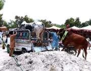حیدر آباد: عیدالاضحی کی آمد کے موقع پر شہری مویشی منڈی قربانی کے لیے ..