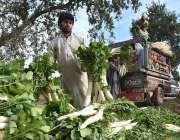 پشاور: کسان مولیاں ٹرک پر لوڈ کررہے ہیں۔