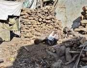 لاہور: سوئی گیس کی بندش کے باعث ایک خاتون لکڑیاں کے ٹال پر گاہکوں کا ..
