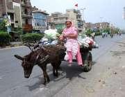 فیصل آباد:خانہ بدوش خاتون گدھا ریڑھی پر کچرائے لادھے جار ہی ہے۔