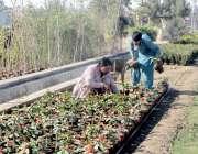 فیصل آباد: مزدور گاہکوں کو متوجہ کرنے کے لیے گملے وغیرہ سجا رہے ہیں۔