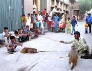 فیصل آباد: مداری اپنے خاندان کی کفالت کے لیے بندر کا تماشہ کھا رہا ہے۔