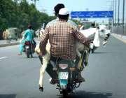 حیدر آباد: عیدالاضحی کی آمد کے موقع پر موٹر سائیکل سوار قربانی کے لیے ..