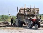 پشاور: مزدور ٹریکٹر ٹرالی پر پاپولر کی لکڑی لوڈ کررہا ہے۔