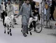 اسلام آباد: ایک بیوپاری گلی گلی گھوم کر قربانی کے جانور فروخت کر رہا ..