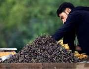 راولپنڈی: ایک ریڑھی بان فروخت کے لیے چیری سجا رہا ہے۔