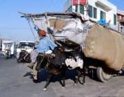 فیصل آباد: ایک معمر شخص بیل گاڑی پر مویشیوں کا چارا لادھے جار ہے ہیں۔