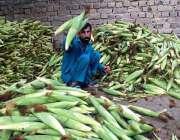 پشاور: دکاندار فروخت کے لیے چھلیاں چھانٹی کر رہاہے۔