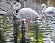 راولپنڈی: ایوب پارک میں پرندے پانی میں دلکش منظر پیش کر رہے ہیں۔