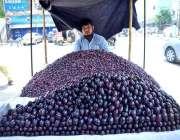 حیدر آباد: ریڑھی بان گاہکوں کو متوجہ کرنے کے لیے فالسہ اور جامن سجائے ..