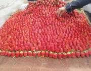 اسلام آباد: وفاقی دارالحکومت میں ریڑھی بان فروخت کے لیے اسٹرابری سجار ..