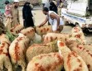 لاہور: ایک فیملی عیدالاضحی پر قربانی کے لیے چھترا پسند کر رہی ہے۔