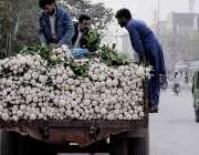 اسلام آباد: محنت کش گلی گلی ٹریکٹر گھما کر شلجم فروخت کررہے ہیں۔