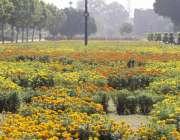 لاہور: جیلانی پارک میں رنگ برنگے پھول خوبصورت منظر پیش کر رہے ہیں۔