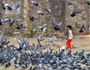 ملتان: بچہ کبوتروں سے کھیل رہا ہے۔