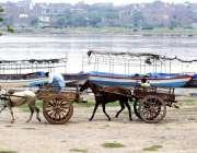 لاہور: ریڑھا بان دریائے راوی کے خشک حصے سے گزر رہا ہے۔