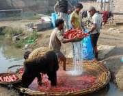 فیصل آباد: کسان سبزی منڈی میں سپلائی سے قبل گاجریں دھو رہے ہیں۔