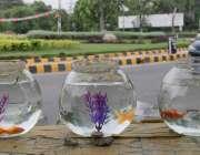 لاہور: لبرٹی چوک میں ایک شخں نے مچھلیاں فروخت کرنے کے لیے رکھی ہوئی ..