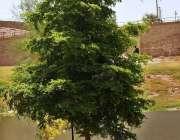 ملتان: شہری گرمی اور دھوپ کی شدت سے بچنے کے لیے درخت کے سائے تلے آرام ..