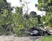 اسلام آباد: وفاقی دارالحکومت میں تیز آندھی کے باعث درخت ایک کار کے اوپر ..