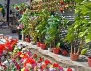 راولپنڈی: دکاندار نے مصنوعی پھلوں کے گلدستے گاہکوں کو بیچنے کے لیے ..