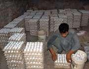 فیصل آباد: مزدور پولٹری فارم میں مرغیوں کے انڈے جمع کررہا ہے۔