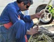 اسلام آباد: محنت کش فروخت کے لیے گنے چھیلنے کے بعد گنڈیریاں تیار کر ..
