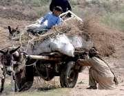 راولپنڈی: خانہ بدش شخص چولہا جلانے کے لیے خشک لکریاں جمع کررہا ہے۔