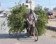 ملتان: ایک شخص سائیکل پر ٹہنیاں رکھے جارہا ہے۔