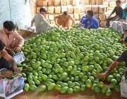 حیدر آباد: مزدور فروٹ منڈی لیجانے کے لیے آم لکڑی کی پیٹیوں میں پیک کر ..
