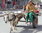 سرگودھا: خانہ بدوش خاتون گدھا ریڑھی پر سوار اپنی منزل کی جانب رواں ہے۔
