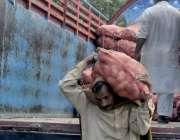 لاہور: سنگھ پورہ سبزی منڈی میں محنت کش ٹرک سے آلو کی بوریاں اتار رہاہے ..