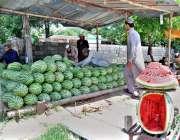 اسلام آباد:دکاندار گاہکوں کو متوجہ کرنے کے لیے تربوز سجا رہا ہے۔