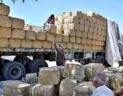 سیالکوٹ: مزدور ٹرک سے توڑی اتارنے میں مصروف ہیں۔