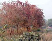 اسلام آباد: بدلتے موسم کے ساتھ رنگ برنگے درخت خوبصورت منظر پیش کررہے ..