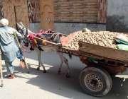 پشاور: ایک معذور شخض پھیری لگا کر آلو فروخت کر رہا ہے۔