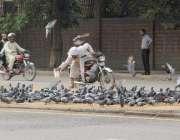 لاہور: استنبول چوک میں ایک موٹر سائیکل سوار شہری کبوتروں کو دانہ ڈال ..