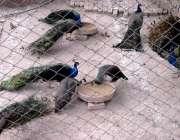 راولپنڈی: ایوب پارک میں سیر و تفریح کے لیے آنیوالے شہریوں کے لیے رکھے ..