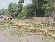 فیصل آباد: جی ٹی ایس روڈ پر لگے درختوں کا ٹی ایم اے کی جانب سے شجرکاری ..