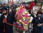 سرگودھا: چہلم حضرت امام حسین(رض) کے موقع پر ذوالجناح کا مرکزی جلوس اپنے ..