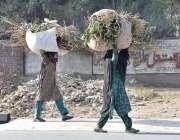 پشاور: خانہ بدوش خواتین چولہا جلانے کی غرض سے خشک لکڑیاں اٹھائے جا رہی ..