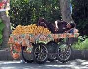 اسلام آباد: ریڑھی بان آم سجائے گاہکوں کا منتظر ہے۔