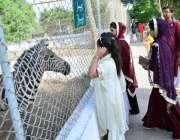 حیدر آباد: خواتین اور بچے چڑیا گھر میں جانور دیکھ رہے ہیں۔