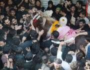 لاہور: عاشورہ محرم کے مرکزی جلوس میں شامل عزادار عقیدت سے ذوالجناح ..
