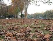 اسلام آباد: بدلتے موسم سڑک کنارے گرین بیلٹ پر درختوں سے گرے خشک پتے ..