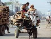 سرگودھا: خانہ بدوش خواتین گدھا ریڑھی پر لکڑیاں رکھے اپنی منزل کی جانب ..