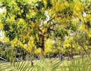 اسلام آباد: وفاقی دارالحکومت میں موسمی پھولوں اور پودوں کا دلکش منظر۔