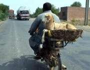 سرگودھا: موٹر سائیکل سوار بکرا لوڈ کیے جا رہا ہے۔