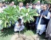 لاہور: سینئر صوبائی وزیر عبدالعلیم خان ایوان وزیر اعلیٰ میں پودا لگا ..
